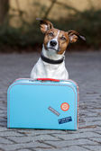 Dog with a bag — Stock Photo