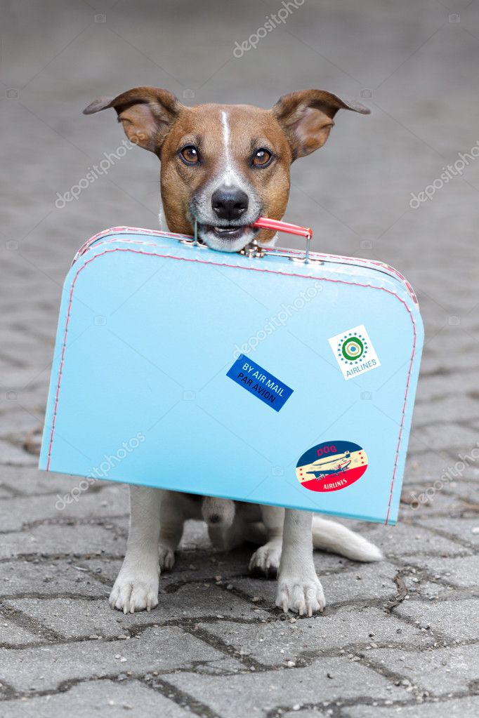 Dog holding a blue bag   Stock Photo #9429978