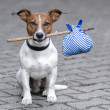 Royalty-Free Stock Photo: Dog and a stick