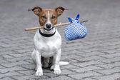 Pies i kij — Zdjęcie stockowe