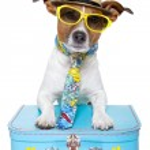 Dog as a tourist — Stock Photo