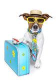 Bir turist olarak köpek — Stok fotoğraf
