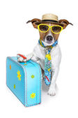 Dog as a tourist — Stock Photo