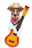 Country dog with a guitar — Stock Photo