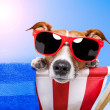 Foto Stock: Dog sunbathing