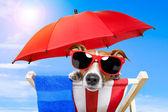 晒日光浴的狗 — 图库照片