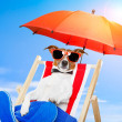 Stock Photo: Dog on deck chair