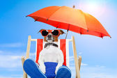 Dog on a deck chair — Stock Photo