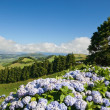 Azores island - Sao Miguel - Stock Photo