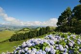 Azores island - Sao Miguel — Stock Photo