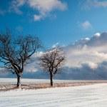 Snowstorm — Stock Photo