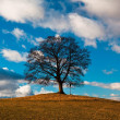 Lonely tree — Stock Photo