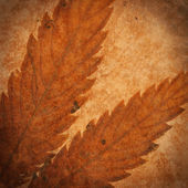 Composition with aged paper and leaf — Stock fotografie