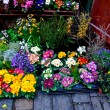 Flower market in spring — Stock Photo
