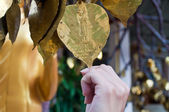Buddism golden money tree — Stock Photo