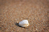 White shell — Stock Photo