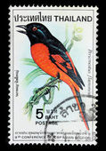 Pericrocotus Flammeus Stamp — Stock Photo