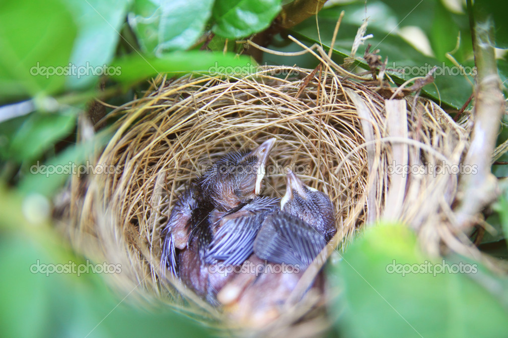 Baby bird sleep in nest — Stock Photo #10659581