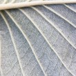 Texture of leaves - Stock Photo