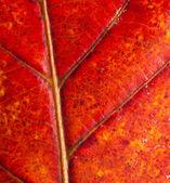 Czerwone liście — Zdjęcie stockowe