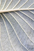 Texture of leaves — Foto de Stock