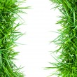 Green grass — Stock Photo #9744728