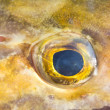 Fish eye - Stock Photo