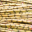 Sugar cane — Stock Photo #9755985