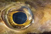 Fish eye — Stock Photo