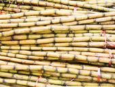 Sugar cane — Foto Stock