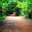 Walking path in deep forest - Stock Photo