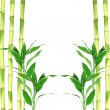 bamboo leaves&quot — Stock Photo