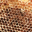 Foto Stock: Old honey comb