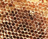 Old honey comb — Stock Photo