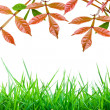 Leaves background — Stockfoto
