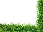 新鲜青草帧 — 图库照片