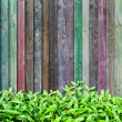 Royalty-Free Stock Photo: Grass on multicolor wood