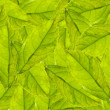 Green leaves — Stock Photo #9816958