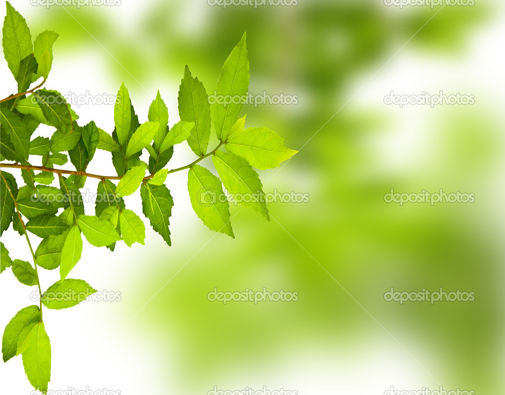 Green leave background — Stock Photo #9813051