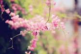 Pink flower with bee — Stock Photo