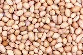 Ground nut — Stock Photo