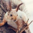 Squirrel — Stock Photo #10036532