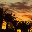 Stock Photo: Photo of palm trees against sky at sunset