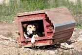 Appeasement psa v obrácené dřevěné chatě za slunného dne v létě — Stock fotografie