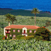 The old homestead on a banana plantation — Stock Photo