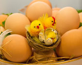 Chicken eggs and chicks — Stock Photo