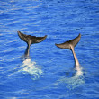 Tweo dolphin tails — Stock Photo