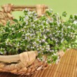 Blooming oregano — Stock Photo