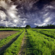 Path through Fields — Stock Photo
