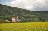 The castle above the rapeseed field — Foto de Stock
